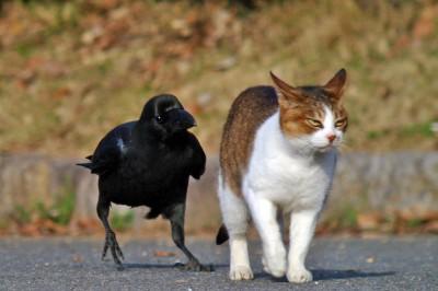 ネコとカラス