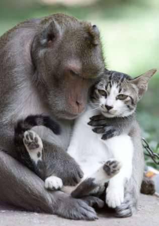 ネコとサル