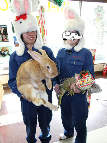 ウサギからイグアナへ