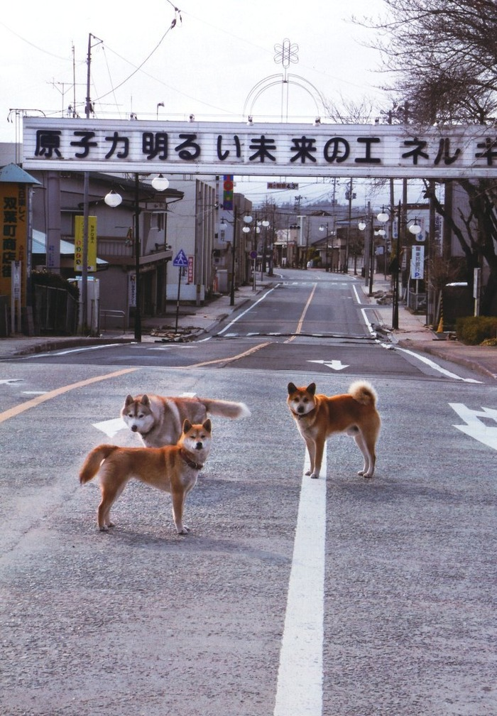 dog_atom