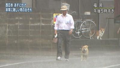 台風と犬とじいさん