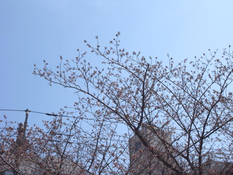 kanamara2012_02