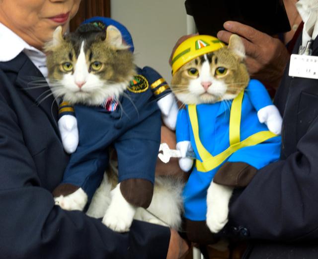 cat_pii