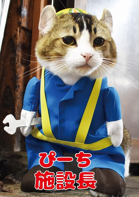 cat_piiii
