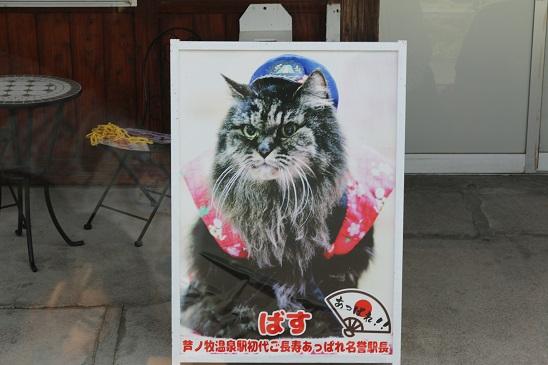 cat_piiiiiii