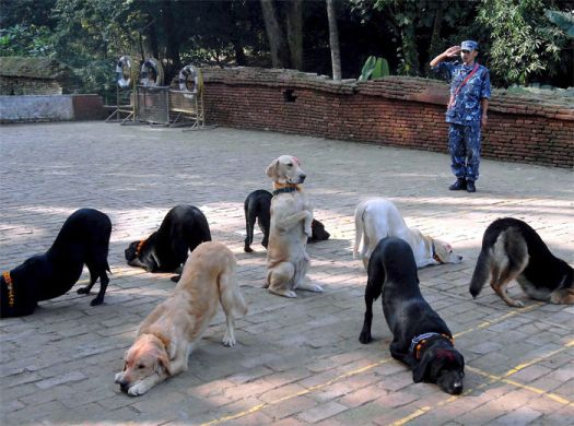 animal_dog_org3589