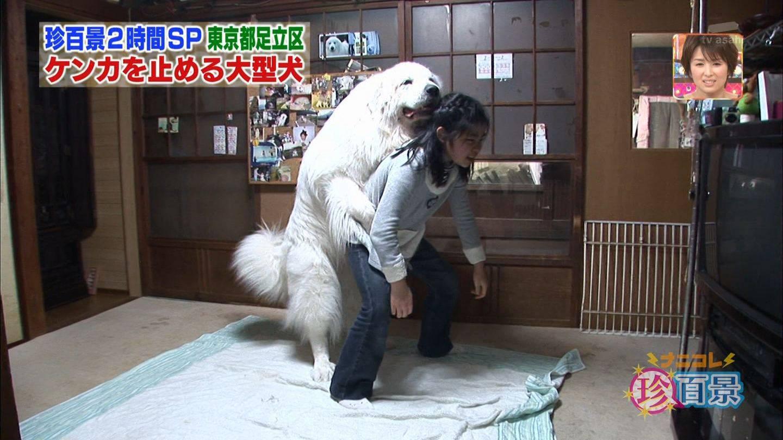 animal_dog_senanikore86efe2e4