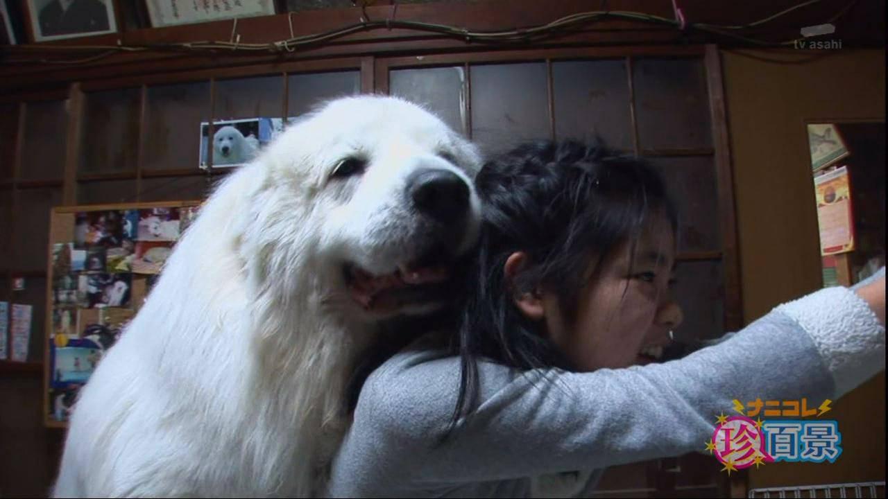 animal_dog_senanikorea6744604