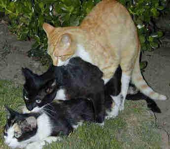 animal_neko_20091213000057