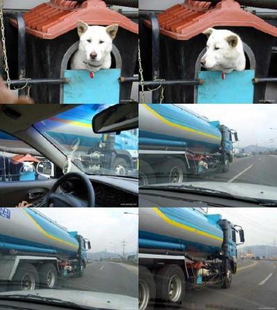 animal_dog02190228