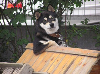 animal_dog220190228