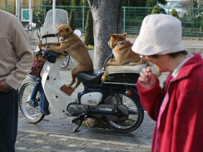 animal_dog320190228